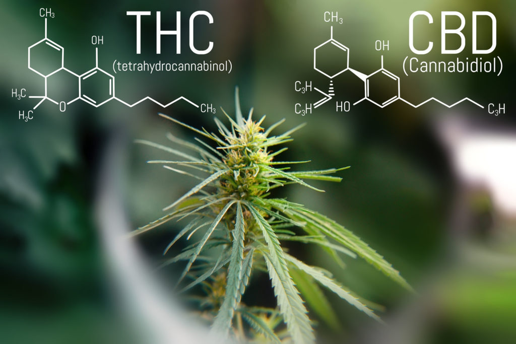 Legal hemp or Cannabis Sativa L. is intended for industrial, technical, food, textile, cosmetic use. Its limit of Delta 9-THC or less in the flowers is tolerated up to 0.3% and must be certified by analysis performed on the cultivation.