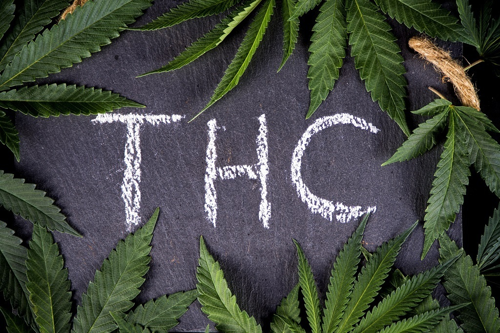 Tetrahydrocannabinol, or THC, is the psychoactive substance par excellence in cannabis: this active ingredient is responsible for the typical effects of taking marijuana, but it remains in the bloodstream for several days to several weeks